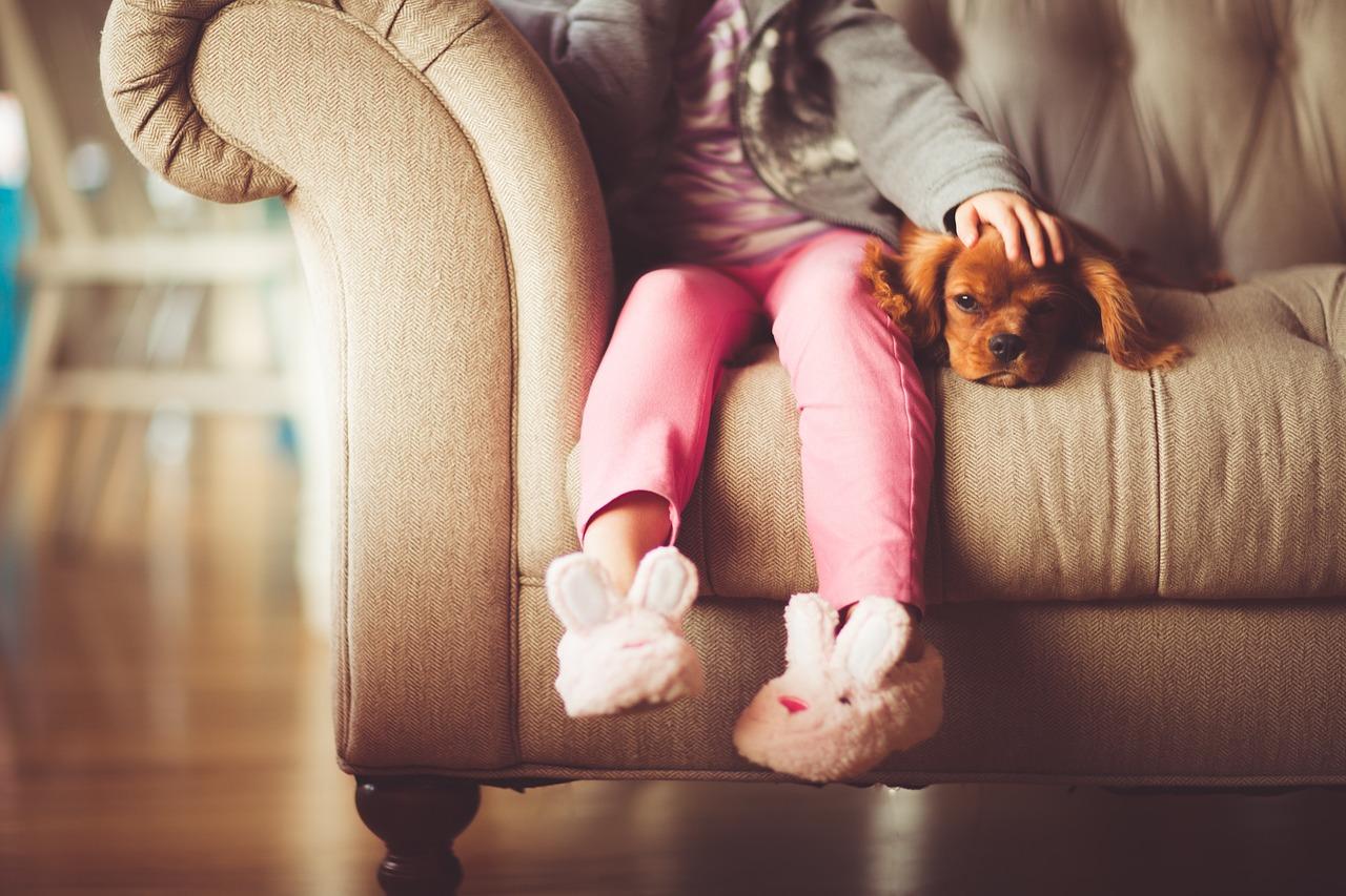 Co warto wiedzieć o gubieniu sierści przez psa