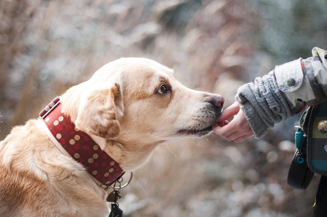 Jak psy się uczą?