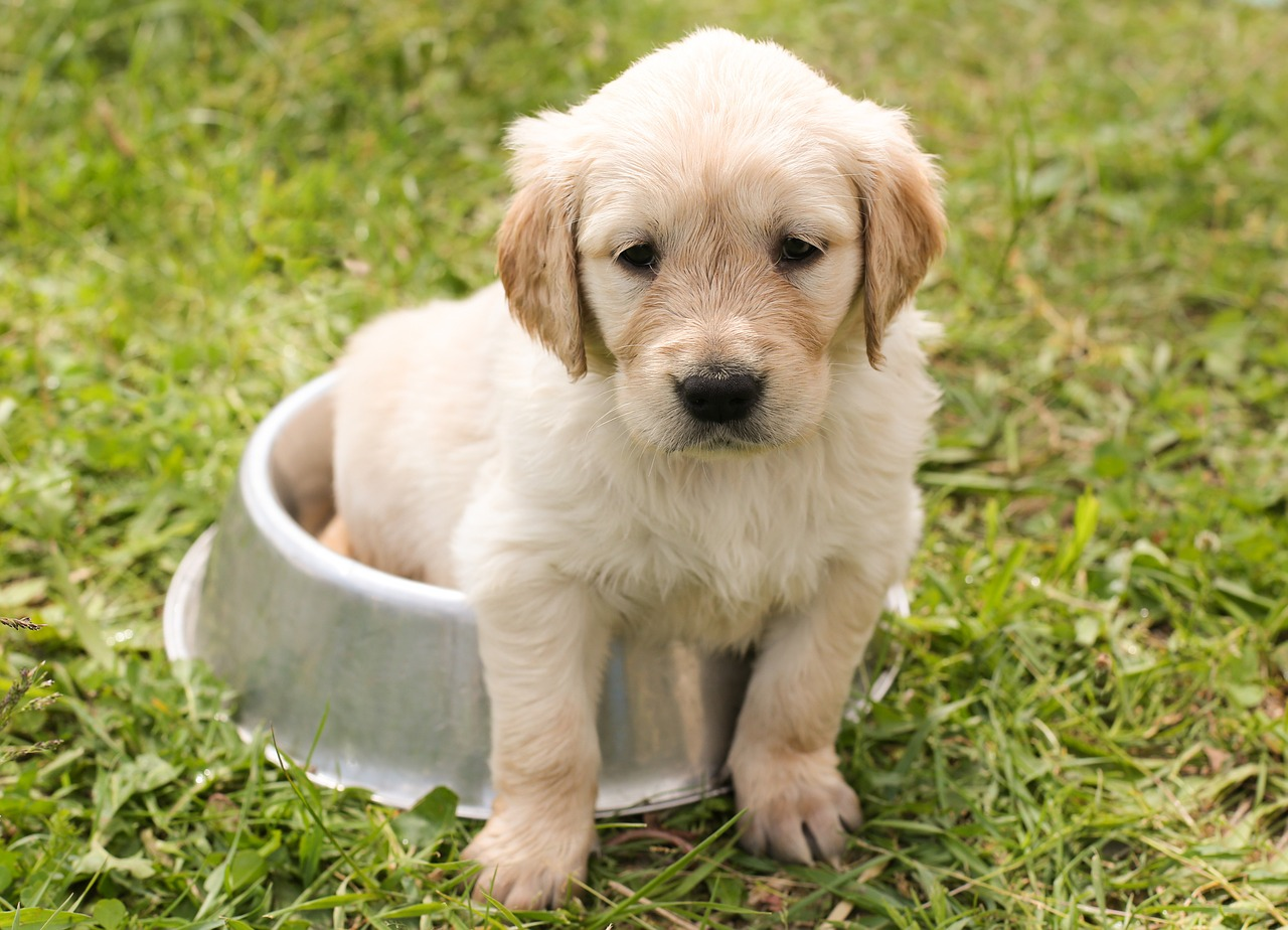 Szkolenie psa w załatwianiu potrzeb fizjologicznych