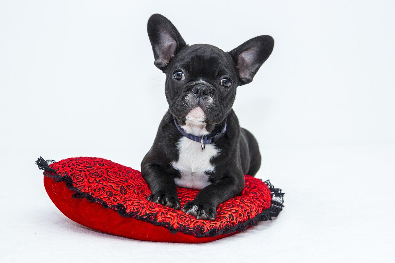 Jak wybrać najlepsze łóżka dla twojego psa
