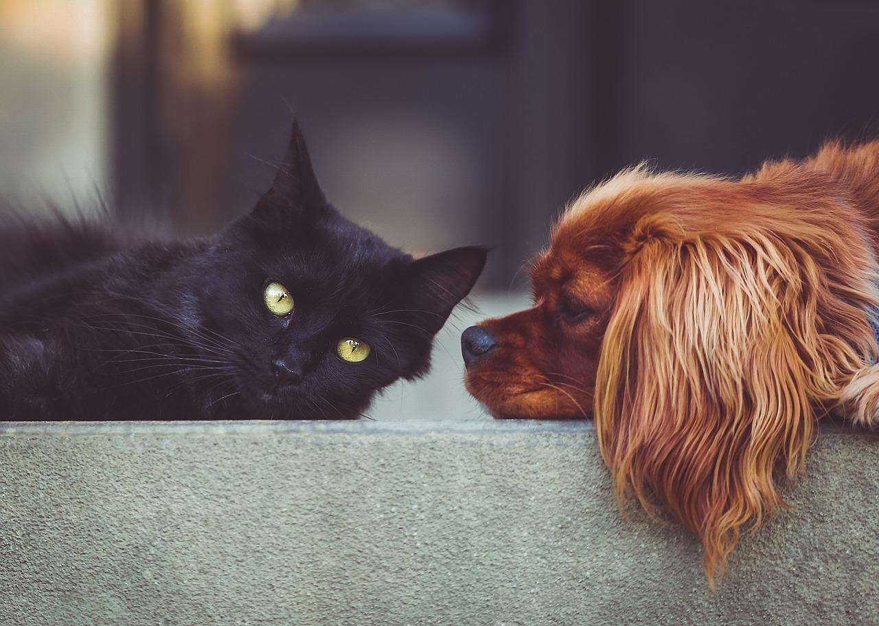 Zwierzęta – bracia nasi mniejsi