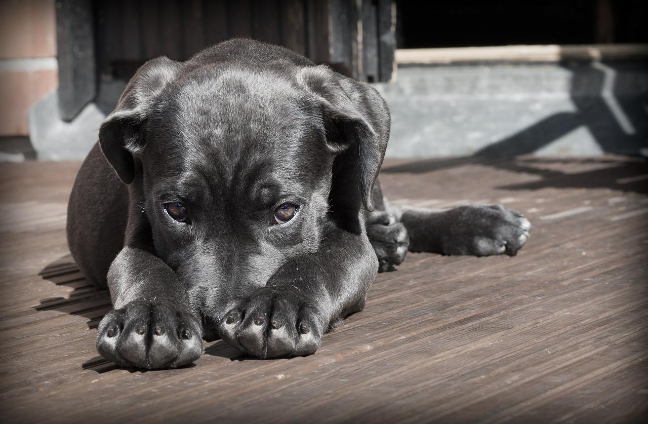 Jak uchronić swój dom przed zapachem psa